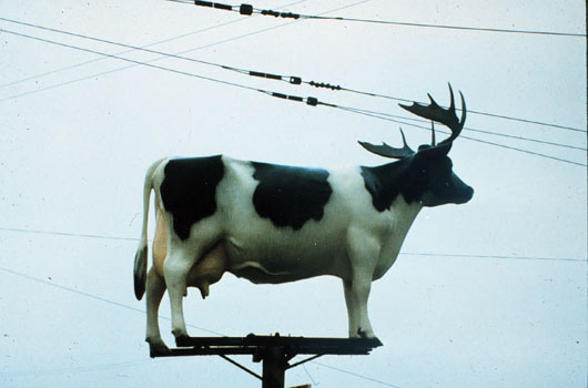 Cow-on_pole_with_horns_530