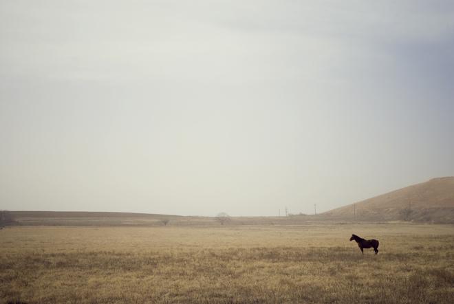 Losthorse2
