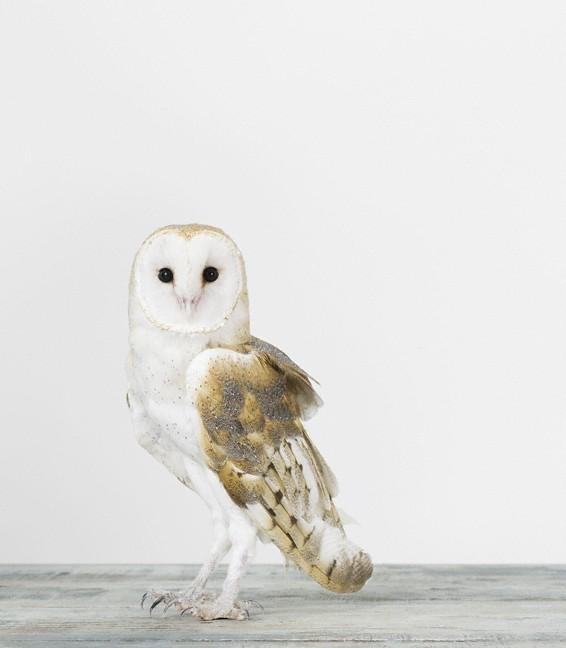 Ssc_sharon_monrtrose_owl