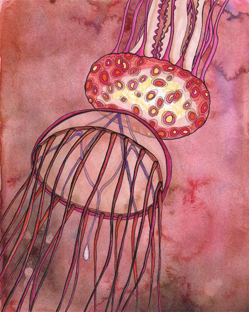 Avita_jellyfishtwo