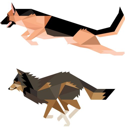 Alsatian-and-wolf-_1322648847
