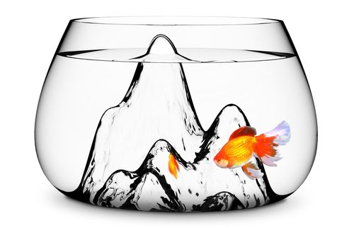 Arulidenfishbowl01